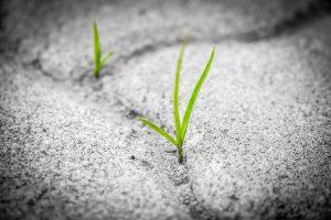 Little plants growing between stones